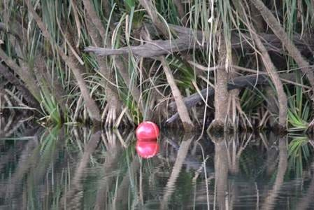 Red Float to Attract Crocs